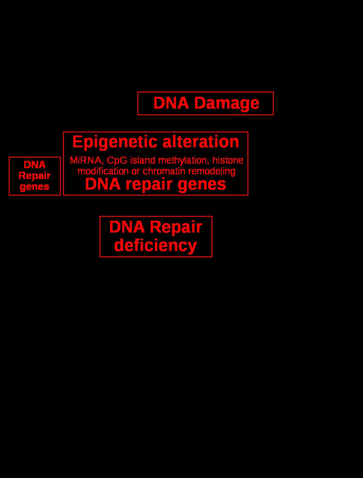 Giardia pathology outlines Giardiasis orvos