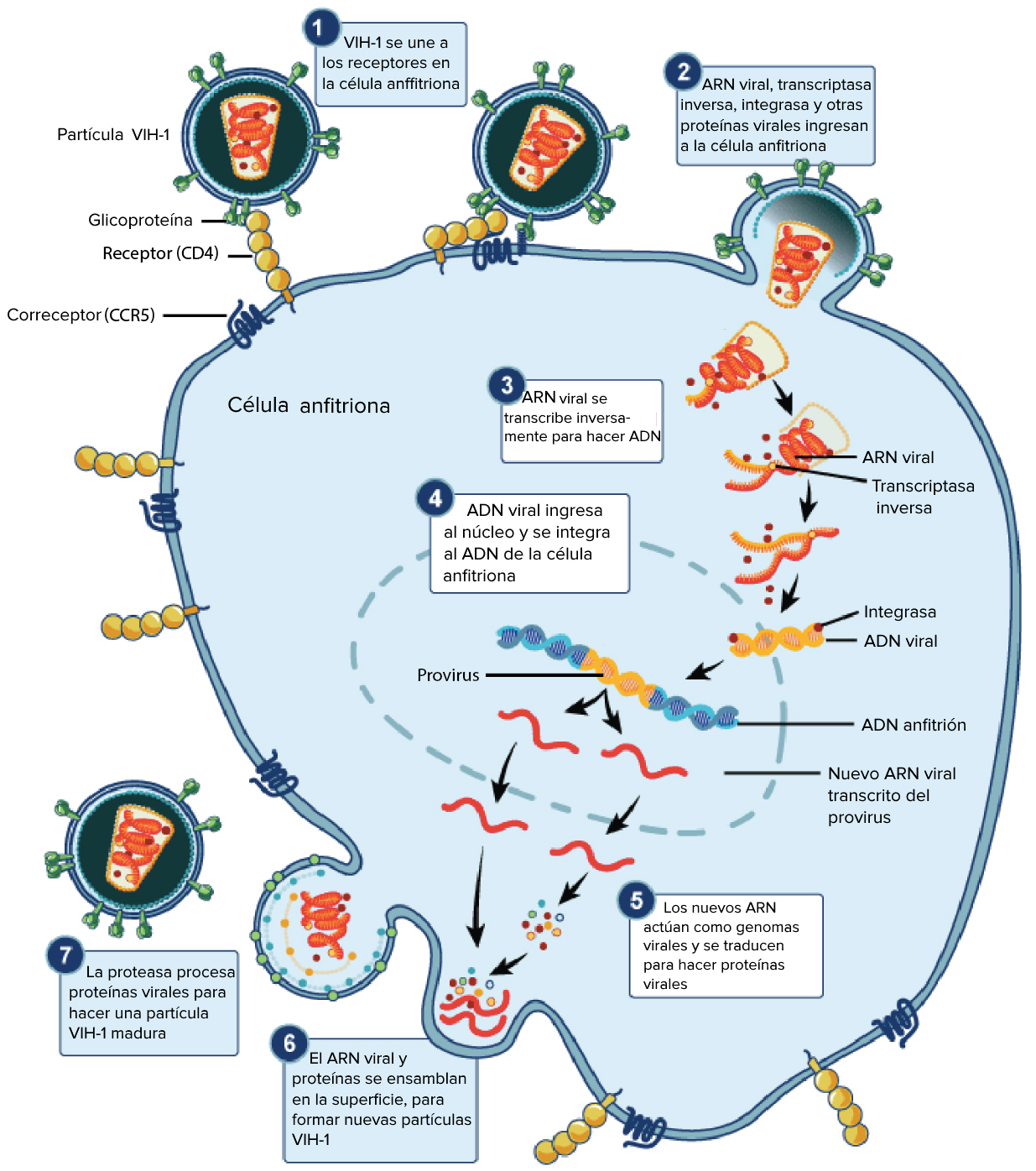 humán papillomavírus retrovírus Vannak pinwormjaim