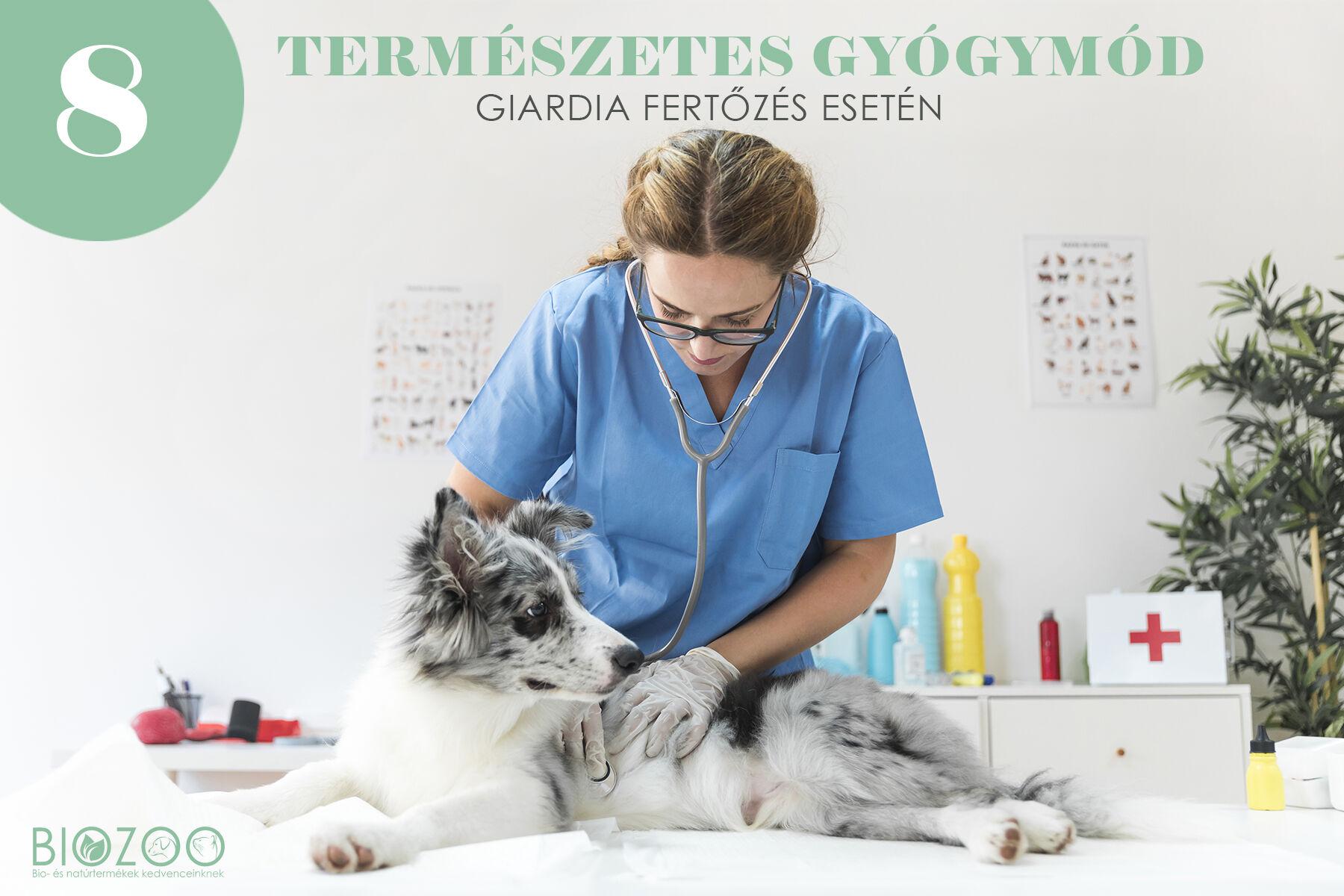 8 természetes gyógymód kutyánk Gardia-fertőzése esetén
