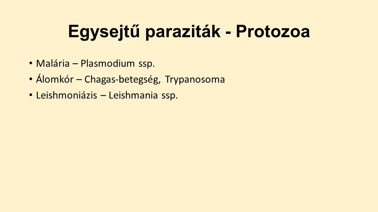 készítmények a protozoon paraziták ellen