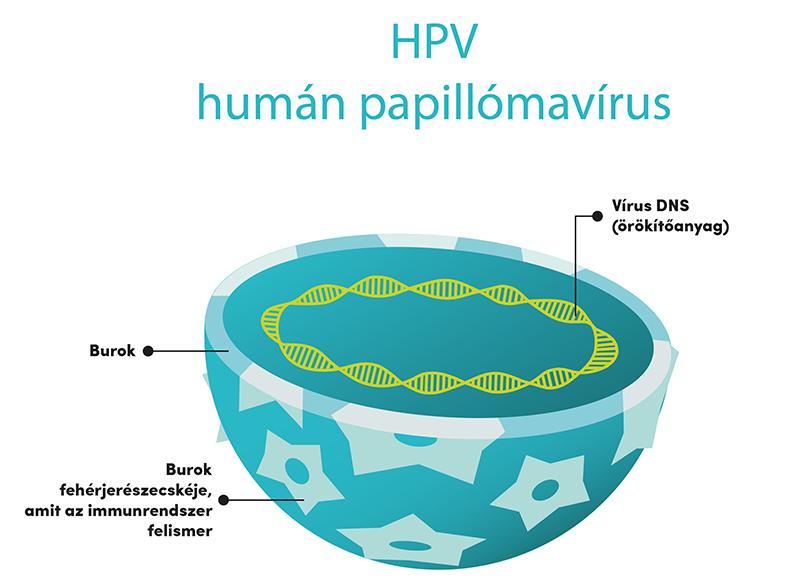 papillomavírus elleni vakcinaművelet