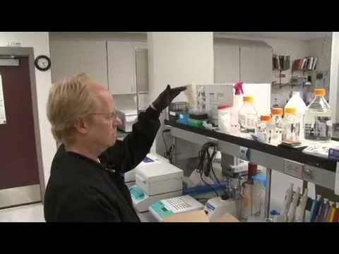 a condyloma mikoplazmózisa