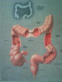 Legjobb kiegészítőket higany méregtelenítés. 5.14. A szájüregi terhelések akupunktúrás háttere