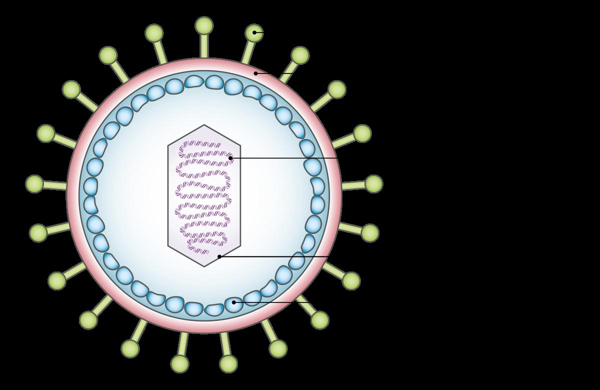 a hpv mindig rákká válik-e klasszikus Hodgkin-limfóma rák