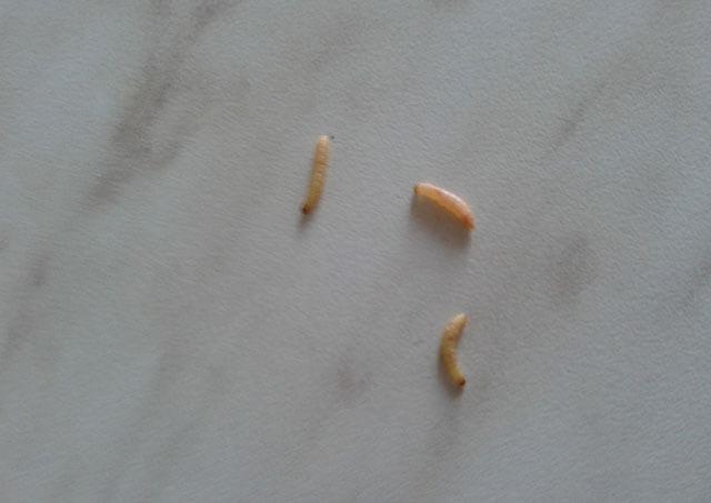 férgek lúgos közegben helmint-megelőző tabletták