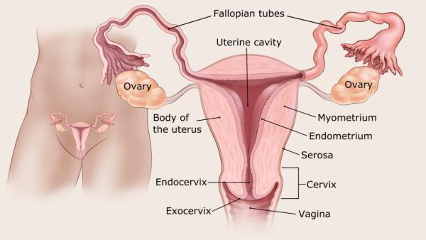 endometrium rákos vérzés mintázata a test teljes méregtelenítése