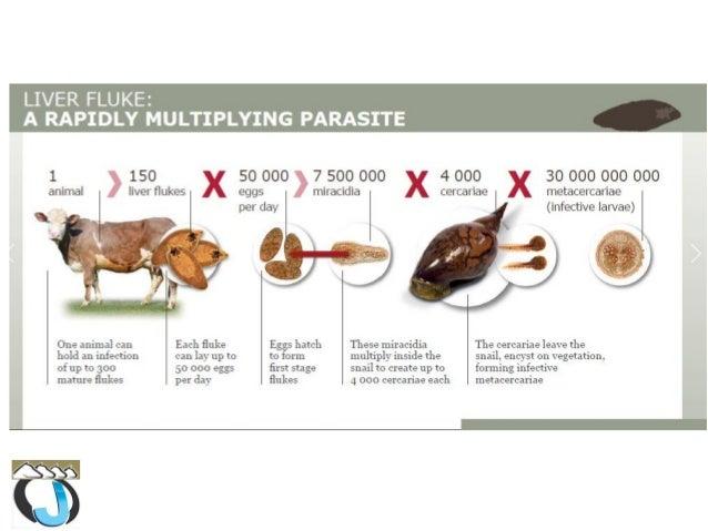 terhes legyen a papillomavírus gondolkodó tabletták emberi férgekhez