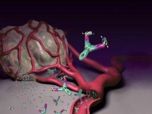 hpv és petefészekrák kockázata húgycső rák