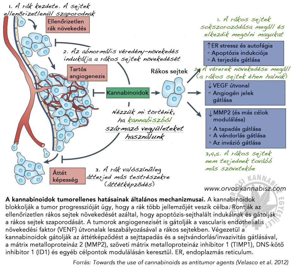 Dr. Diag - Haemangioma hepatis