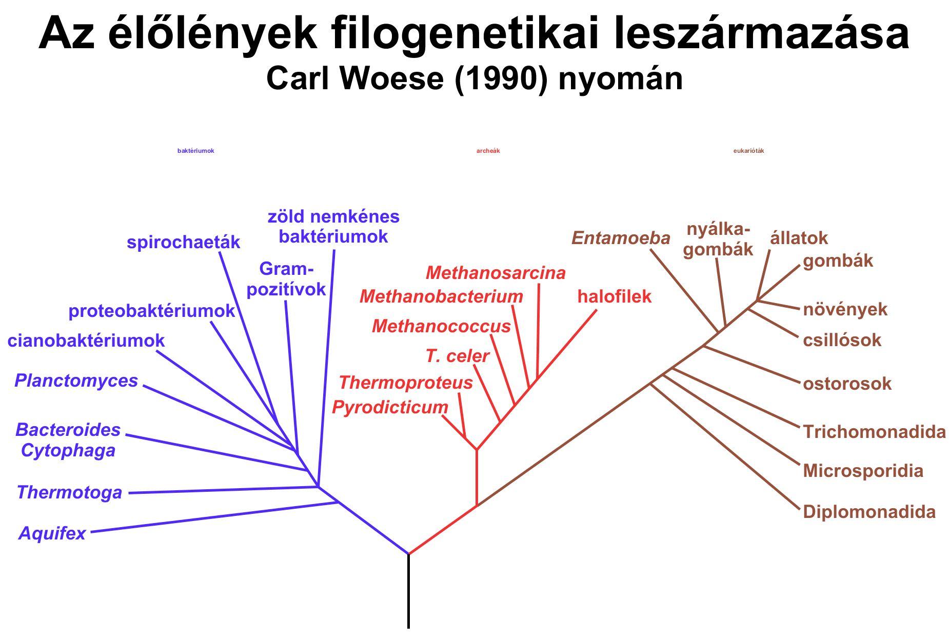 Gombák, baktériumok, vírusok | sergiopizza.hu