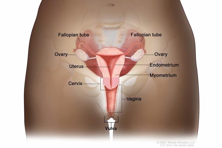 Hogyan lehet felismerni a HPV-t férfiakban (humán papillomavírus)