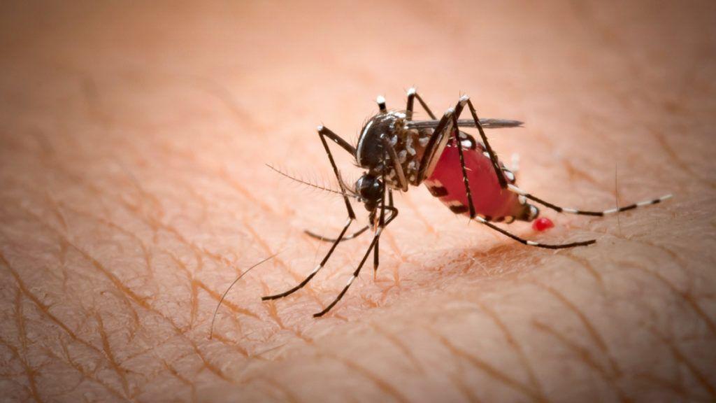 Vérparaziták példák Paraziták példák az emberekre, Navigációs menü