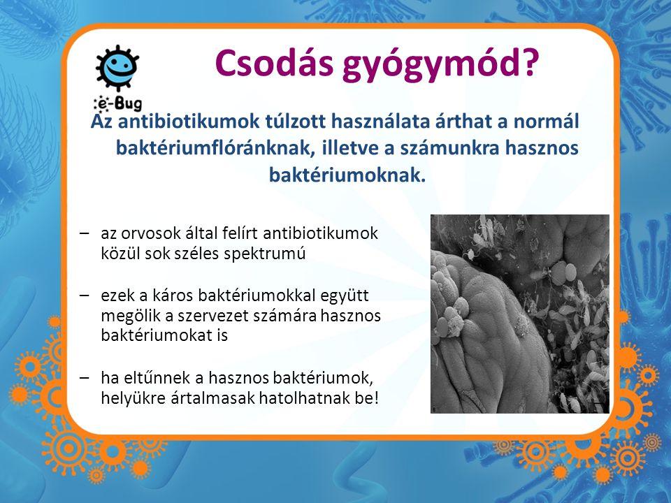 a szervezet számára hasznos baktériumok