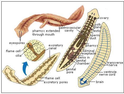 helminták az év gyermekeiben szemölcsök kezelése és okai