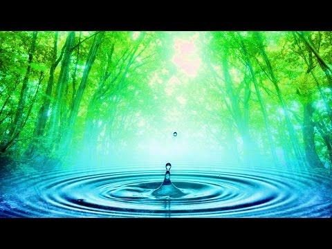 Tisztítás parazitáktól zenével, PARAZITÁK (2 DVD)