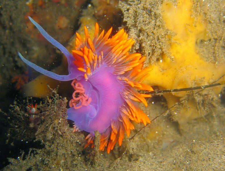 Megtalálták a tenger leghangosabb állatát – egy férget