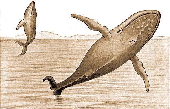 bálna paraziták