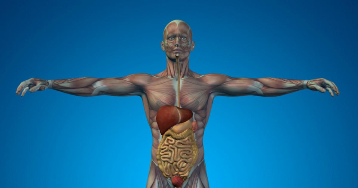 az emberi testben