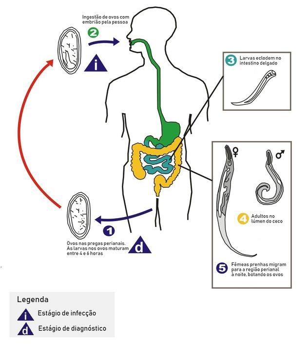 prosztata hormon rák természetes orvosság a pinwormok leküzdésére