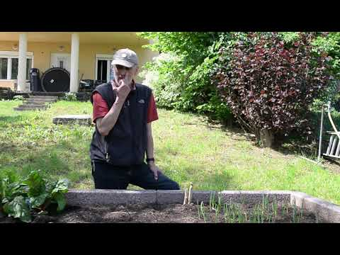 hogyan lehet megszabadulni a parazitáktól a kertben