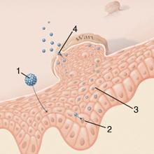 felnőtt nyaki fájdalomkezelés újszülött férgek elleni gyógyszerek