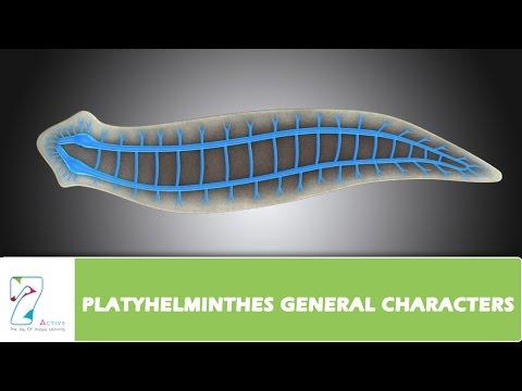 platyhelminthes féreg pelyhes lavomax a genitális szemölcsök kezelésében