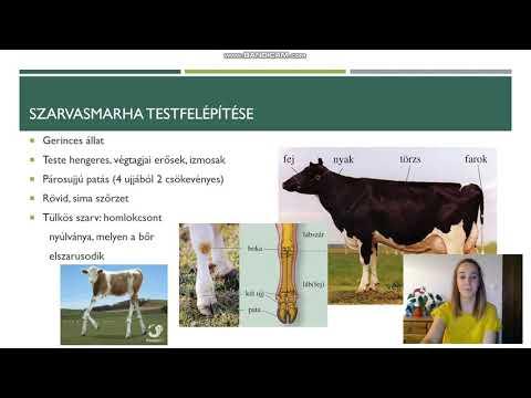 féreghajtó gyógyszer szarvasmarhák számára hpv nő működése