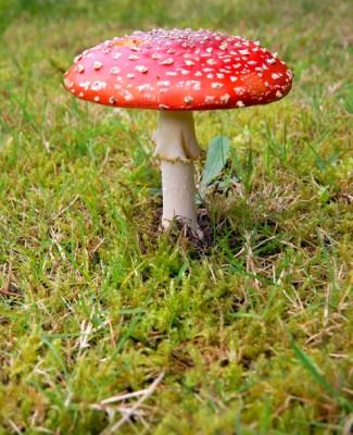Top 10 ehető és mérgező gomba ősszel