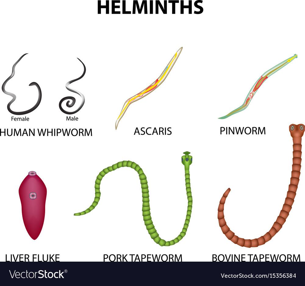 A helmint fertőzés megelőzésének szabályai - sergiopizza.hu
