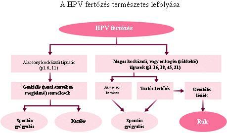 HPV és más vírusok - Nyerje vissza az egészségét! - Medic-Poliklinika