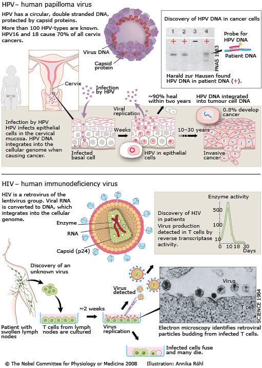 humán papillomavírus retrovírus a penza nemi szemölcsök eltávolítása