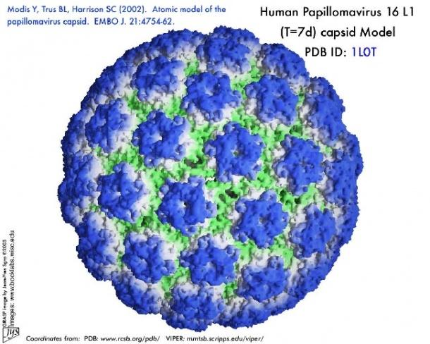 papilloma vírus herpes simplex