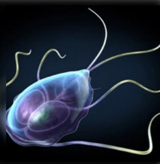 parazita póló 20 cm-es hátlap