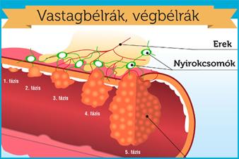 papillomavírus genom nagysága