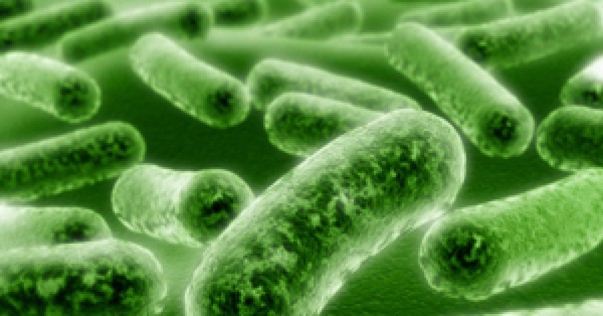 Japán parazita tabletták helmint jelentése tudomány