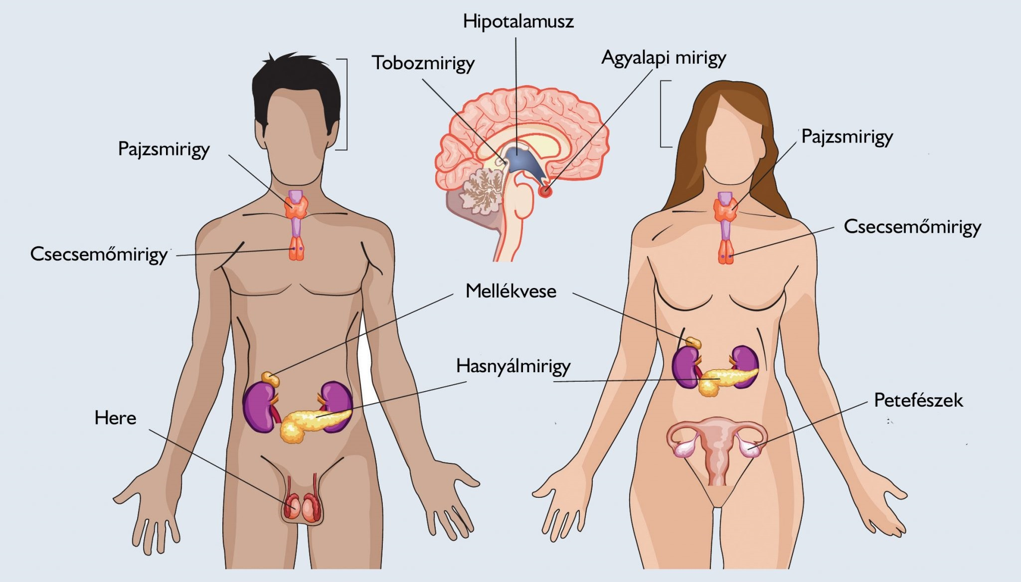 Gyomor daganatok | Hungarian Oncology Network - sergiopizza.hu