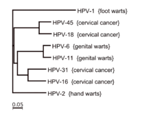 HPV-szűrés és tipizálás