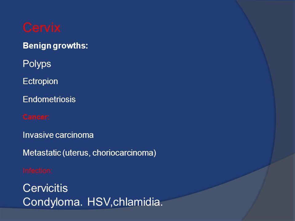 Condilom plat pe uter, Papilloma virus e lingua