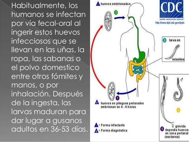 pinworm tünetek hasmenés a gyomorban lévő parazitáktól