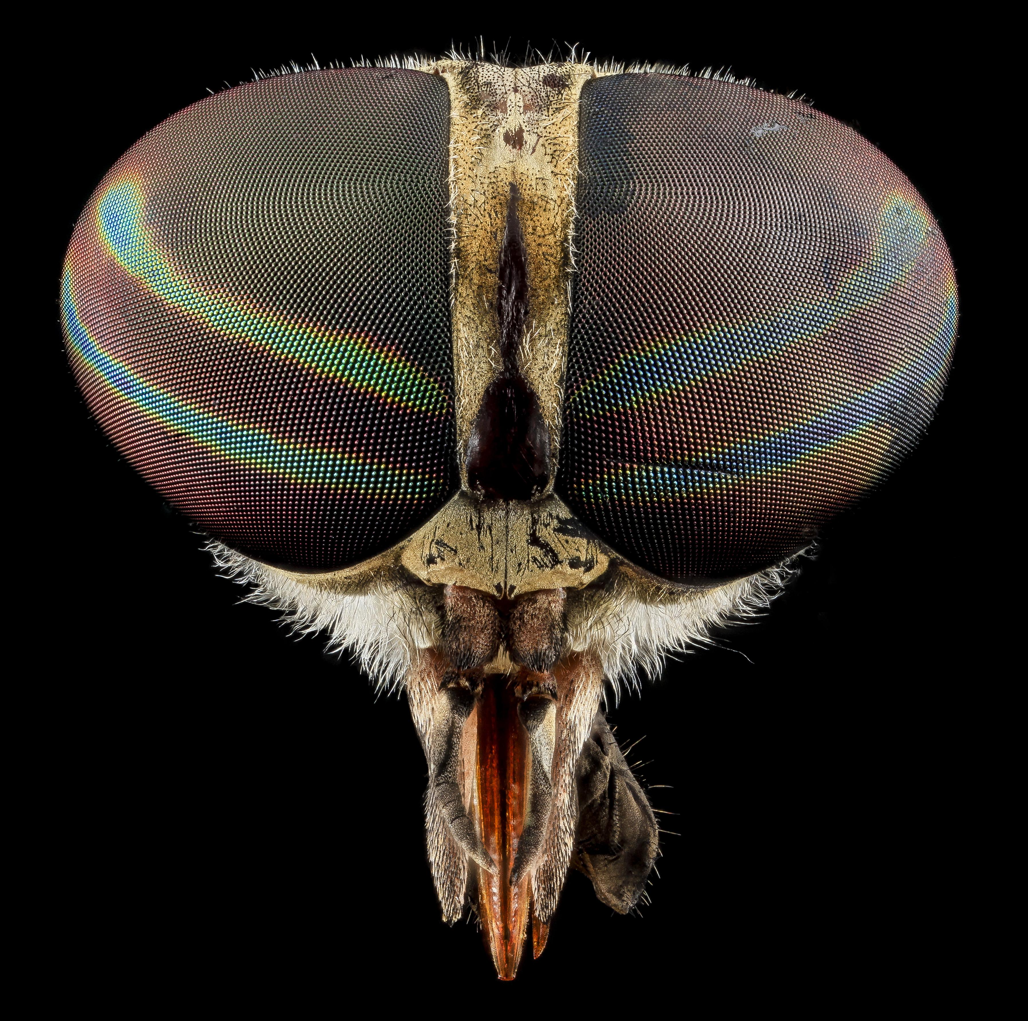 tamoxifen méhnyakrákja