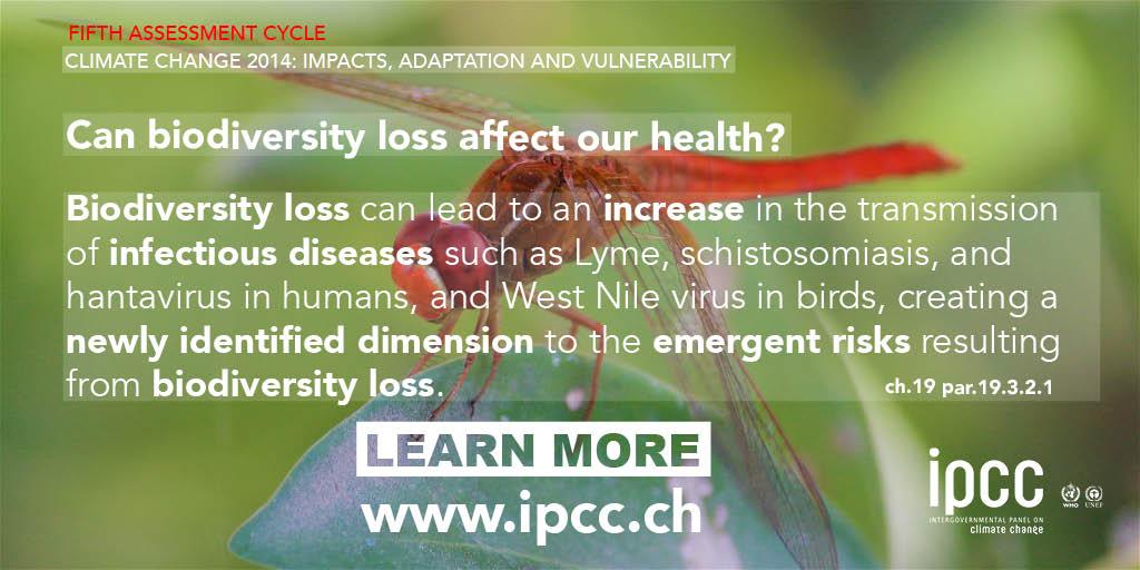 papillomas betegség fekete talpi viszketés
